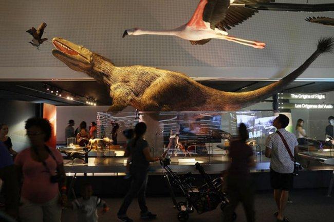 Новая достопримечательность Майами: музей науки