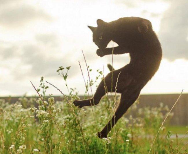 Кошки-ниндзя: фотоработы японского профессионала