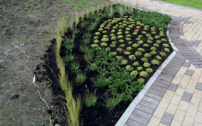 Современное городское озеленение: основные правила и целевые задачи
