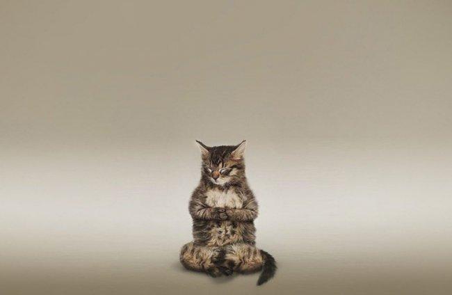 Действительно ли медитация способствует снижению уровня агрессивности?