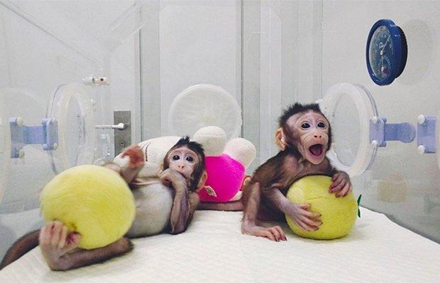 В Китае впервые клонировали приматов по технологии овечки Долли